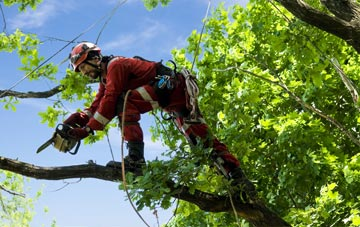 find trusted rated West Yorkshire tree surgeons