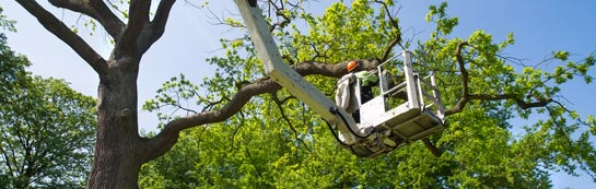 West Yorkshire tree surgery services