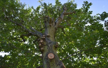 what is West Yorkshire tree surgery?